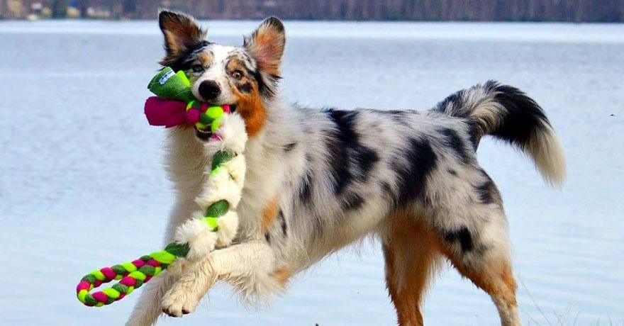 Hundtillbehör