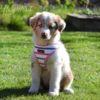 Puppia Sappy Harness A - hundsele