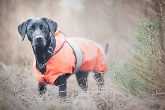 Yemse håller sig varm med Active Canis två-i-ett täcke. Foto: ASia Mujkic