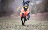 Full fart på Yemse med bollen Good4fun. Foto: Asia Mujkic