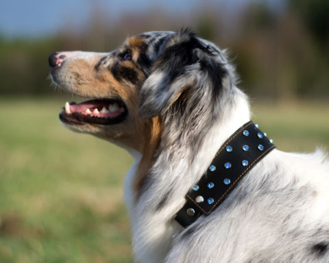 Halsband med blå strass