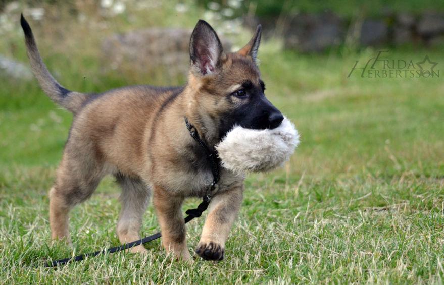 Hundträning och tävlingar