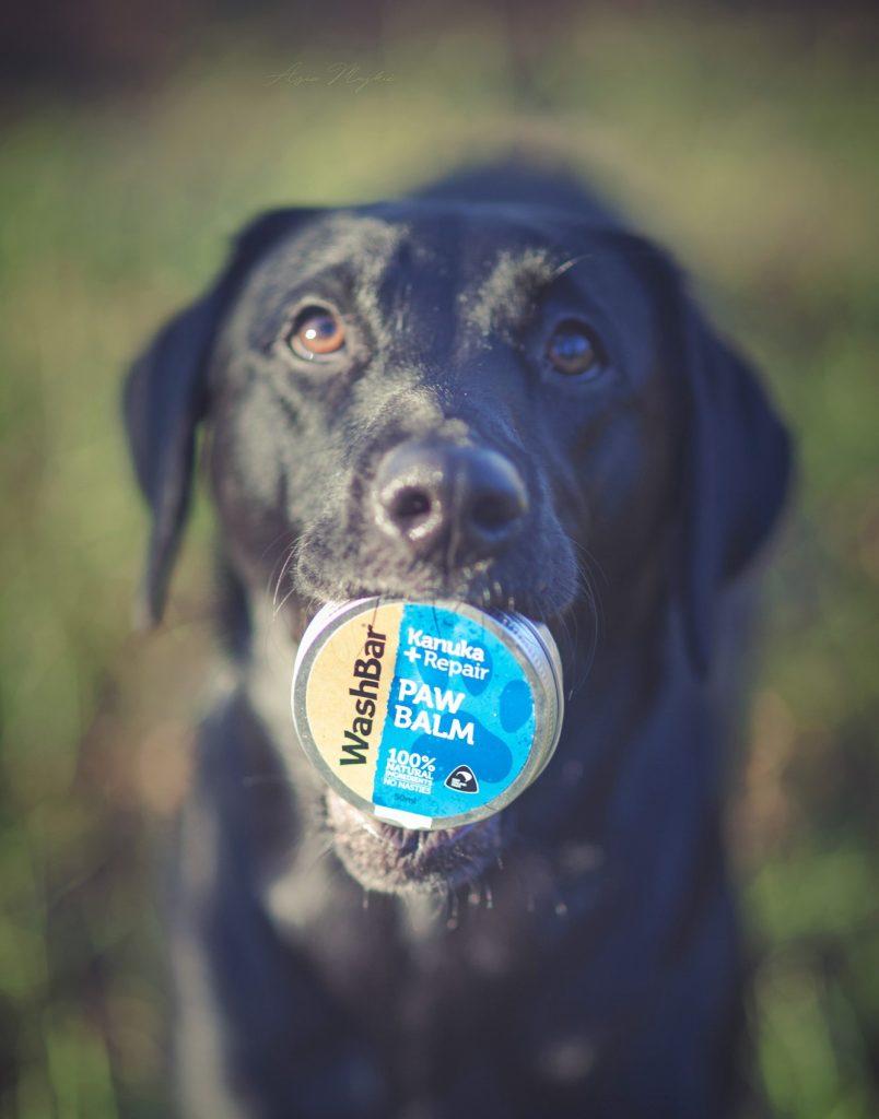 Tassbalsam mot hundsprickor och svamp