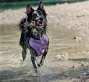 Kylsele för hund