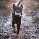 Trixie Boll med rep – Gummiboll med handtag