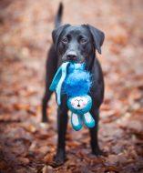 Yemse med sin Wubba Fuzzy Kanin. Foto: Asia Mujkic