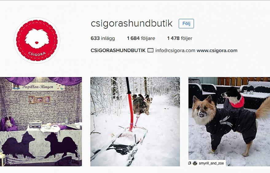 Csigoras Instagramkonto