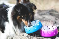 Lovely Dog skål