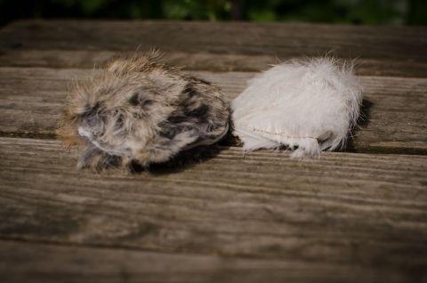 Kaninpäls med pip
