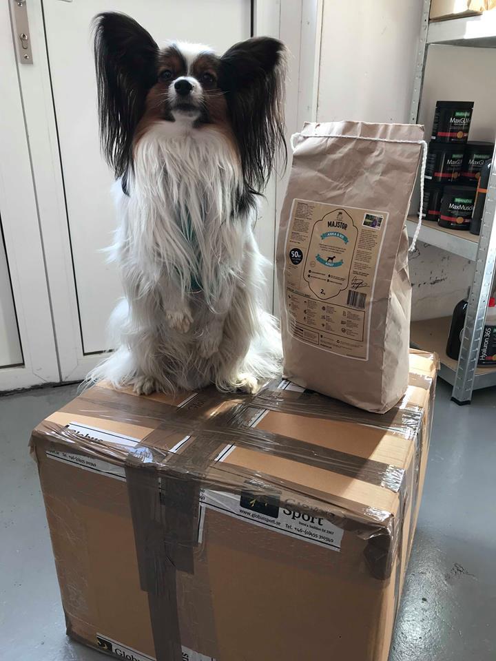 Mat till hemlösas hundar
