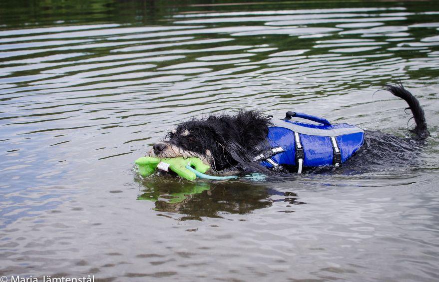Vattenleksaker till hund