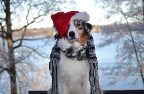 Överraksningspaket julklapp till hund