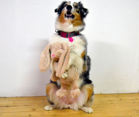 Stor gosig kanin