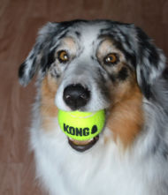 KONG Airdog squeaker boll