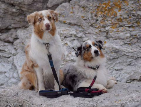 Semesterträning med din hund