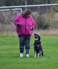 Privatträning med din hund