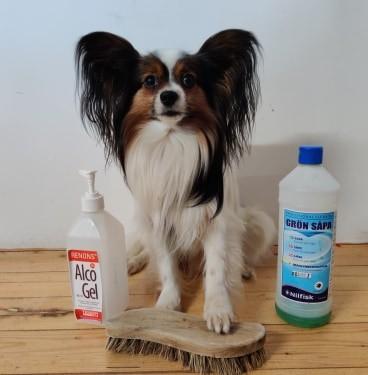 Hundar covid-19