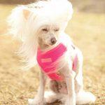 PuppiaSoftNeonhund