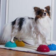 Cirkelträning för hund