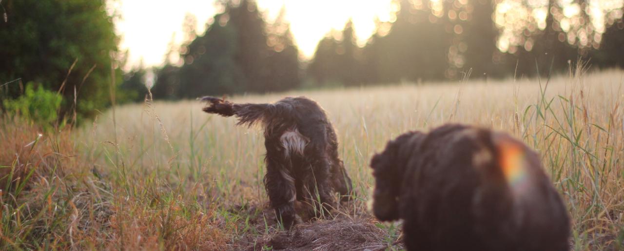 Hundkurser