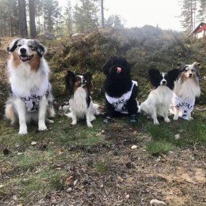 Prova-på Hundsporter