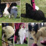 Prova Hundsporter