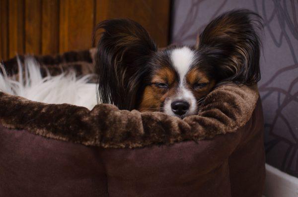 Majstor Chilla - Hundbädd