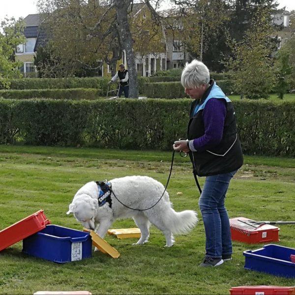 Nosework - Tävlingsförberedande kurs