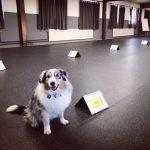 Rallylydnad - Öppen träning