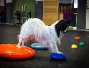 Varför balansträna sin hund?